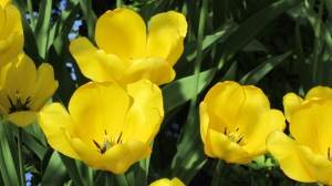 Kevät 2013 037 JK